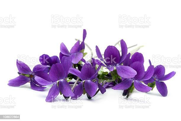 Violets picture id108622864?b=1&k=6&m=108622864&s=612x612&h=wq2hhvzhilqfvyqgklnfe zp8o8ticpw15p7nzfo68c=