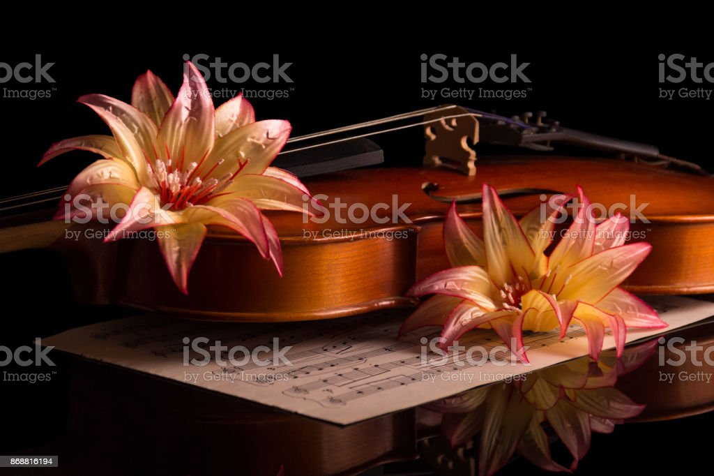 Violin and bright flowers isolated on black stock photo