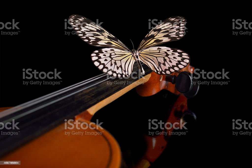 Violin and butterfly. stock photo