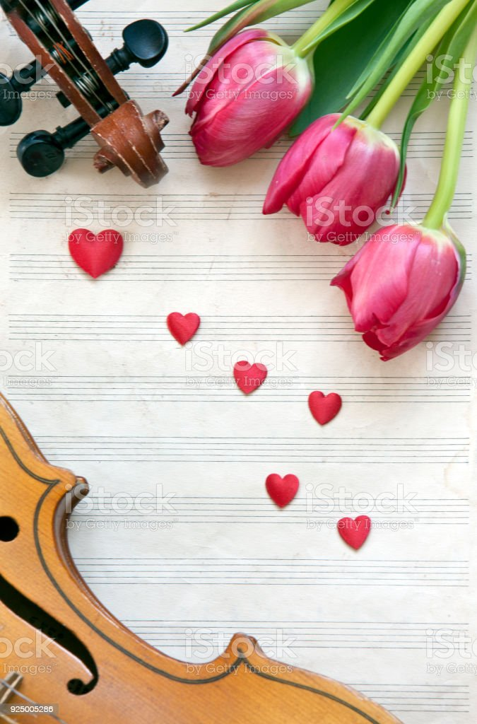Violin and tulips on a white background. Stringed musical instrument. Top view, close-up stock photo