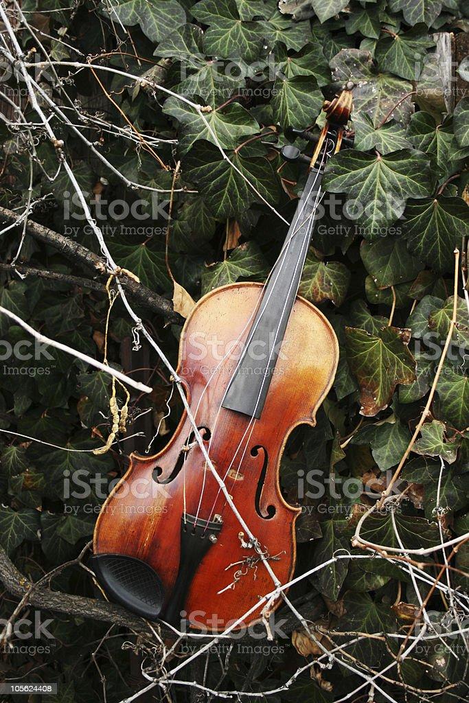 violin in ivy stock photo