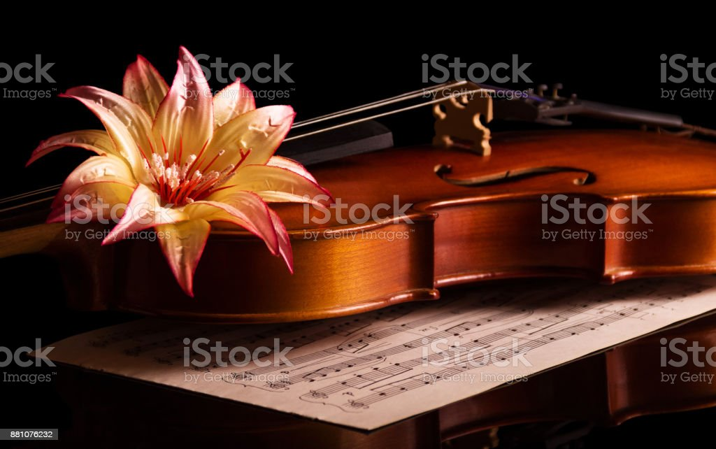 Violin lies on the music notebook, top beautiful flower isolated on black stock photo