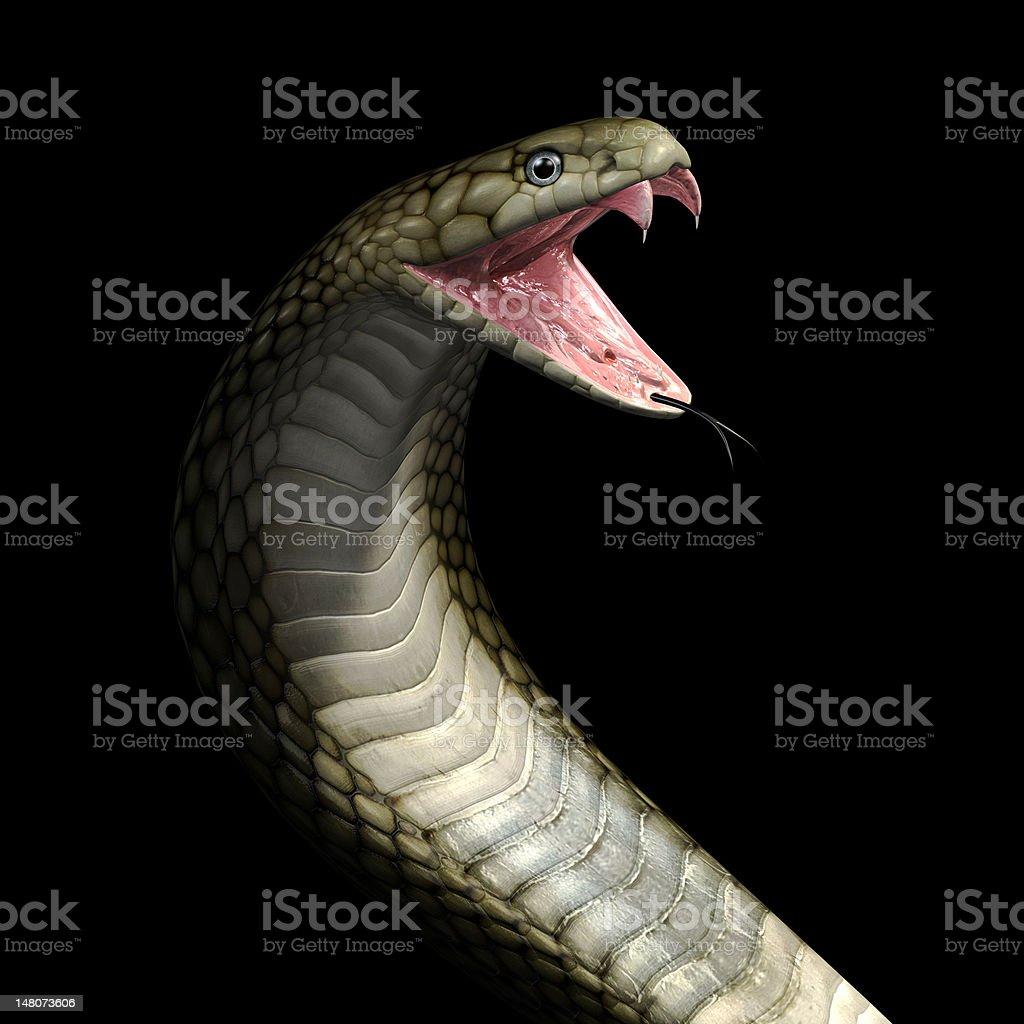 Viper cobra snake stock photo