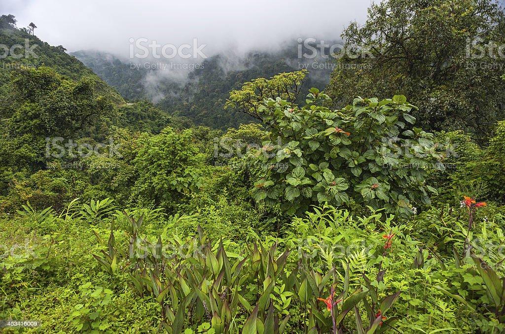 Virgin forest, Arunachal Pradesh, India. stock photo