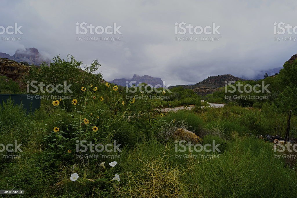 Virgin River Wildflowers stock photo