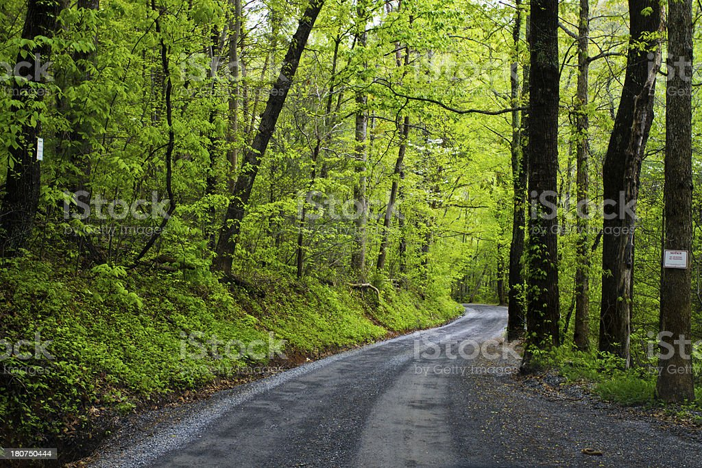 Virginia road in the middle of a forest royalty-free stock photo