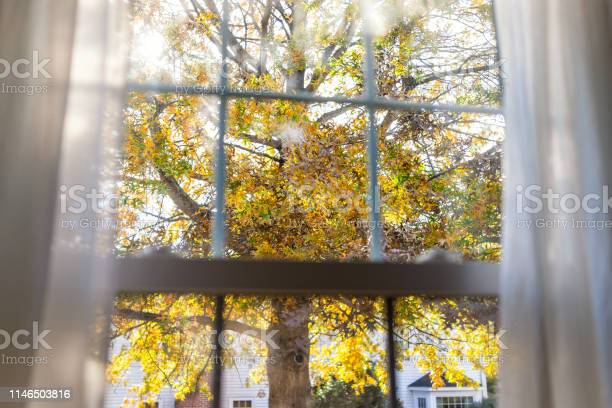 Photo of Virginia yellow autumn view through window of colorful oak leaf foliage in northern VA with tree leaves behind glass window blinds curtains and sunlight