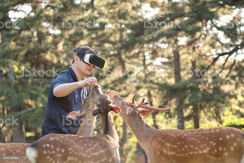 Virtual Reality Experience, Man Feeding Deer in Forest Wearing Headset stock photo
