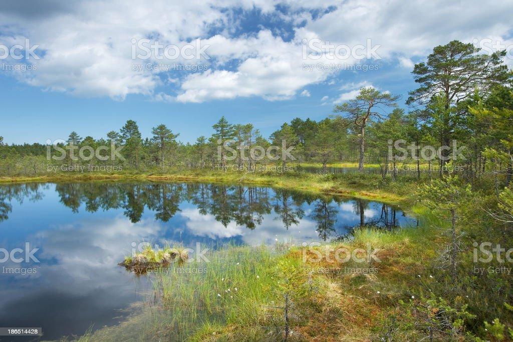 Viru bogs at Lahemaa national park royalty-free stock photo