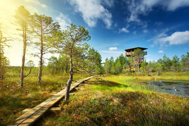 viru bogs at lahemaa national park - estland stockfoto's en -beelden