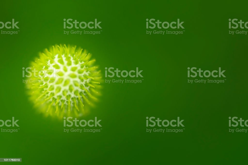 Virus. Close-up image of an organic cell on green background. stock photo