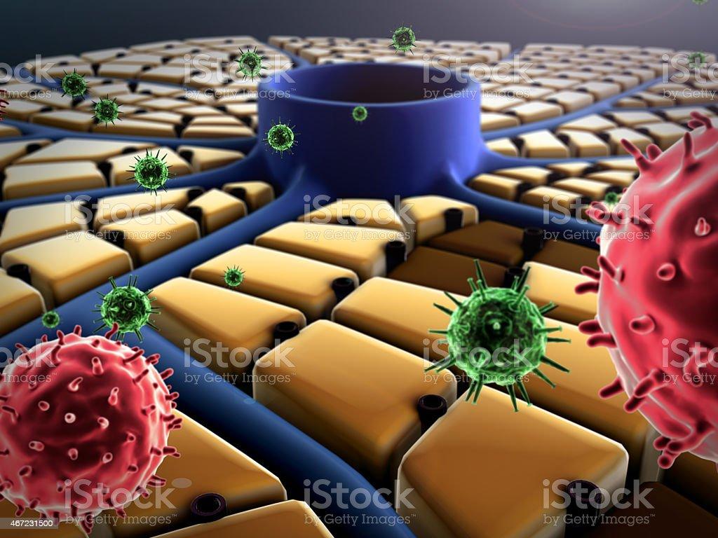 virus, liver vein stock photo