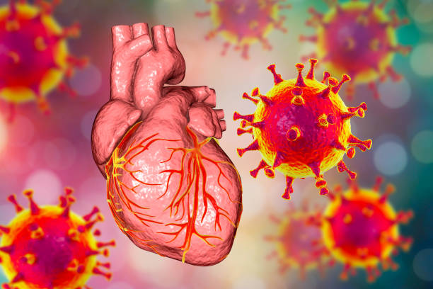COVID-19 viruses affecting the heart, conceptual 3D illustration stock photo