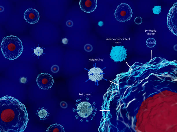 Viruses in gene therapy 3D render of common viruses used in gene therapy gene therapy stock pictures, royalty-free photos & images