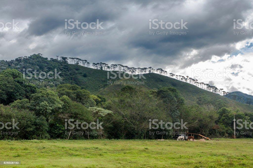Visconde de Maua stock photo