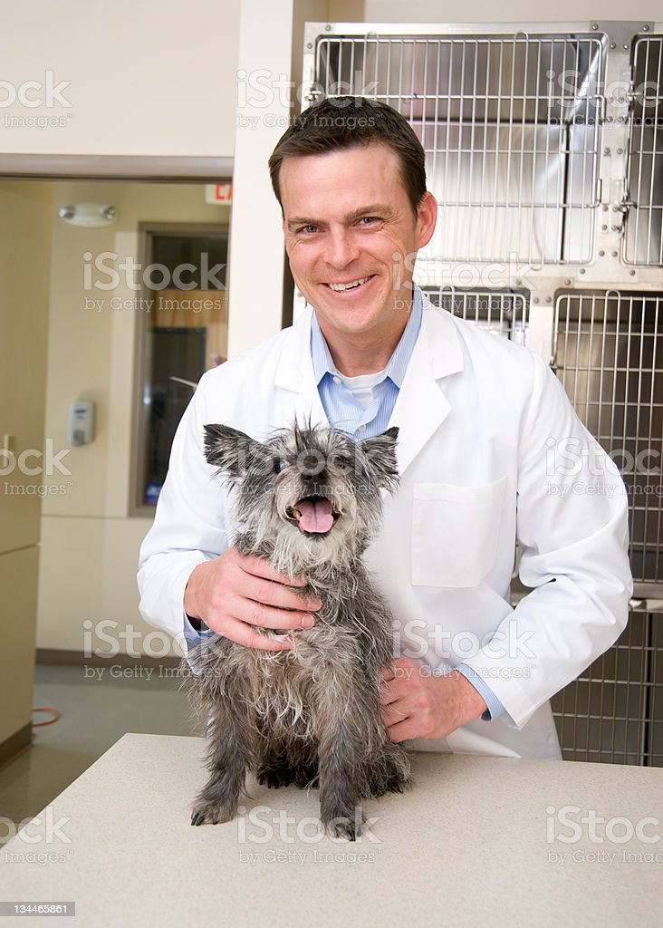 Visit to the Vet royalty-free stock photo