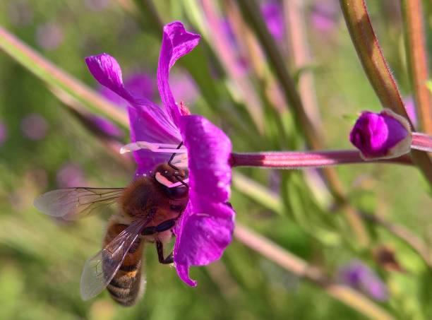 Besuchen Sie Biene – Foto