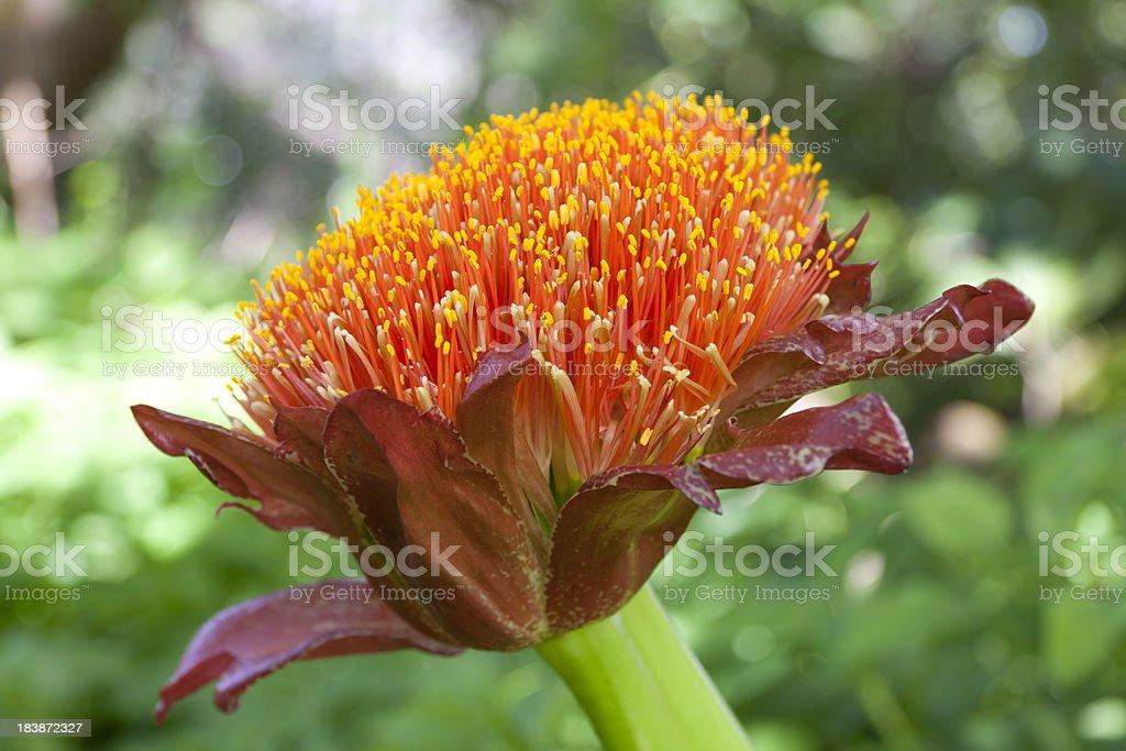 Visiting Madeira: Beautiful Flowers royalty-free stock photo
