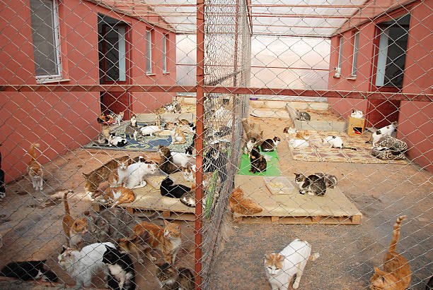 Besuchen Sie die Animal Shelter – Foto