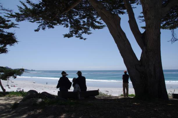 Visiting the beach picture id970402310?b=1&k=6&m=970402310&s=612x612&w=0&h=zbv489ad16r1pj1tbp6kolwgmbjrlfxjc7 31ihzke8=