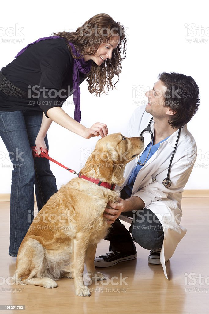 Visiting the vet royalty-free stock photo