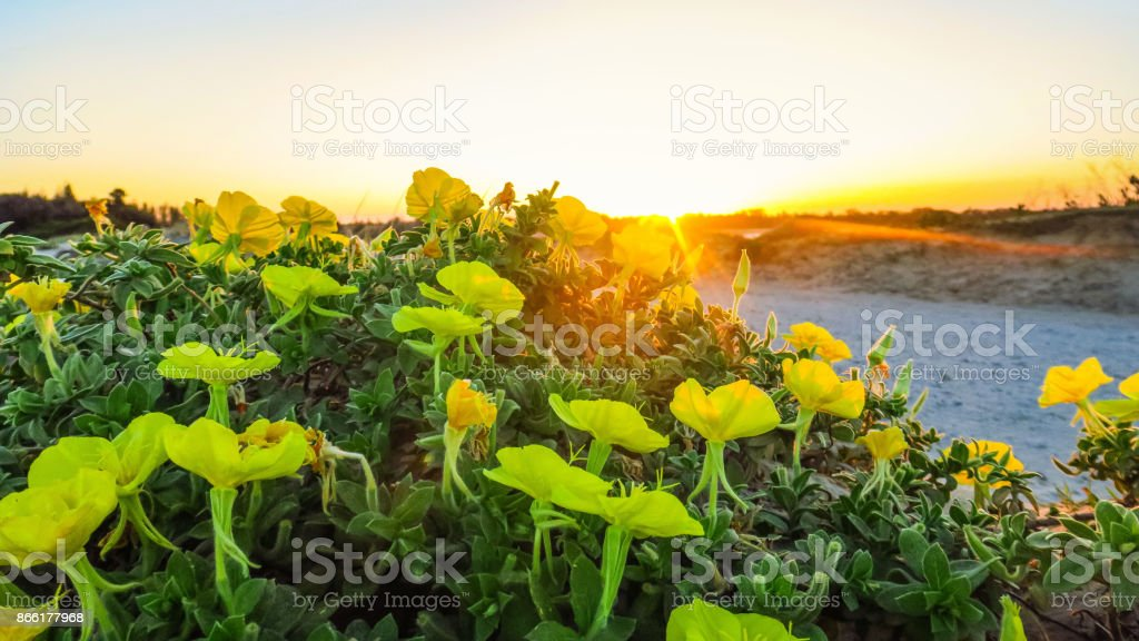 Visiting Yamba in Australia stock photo