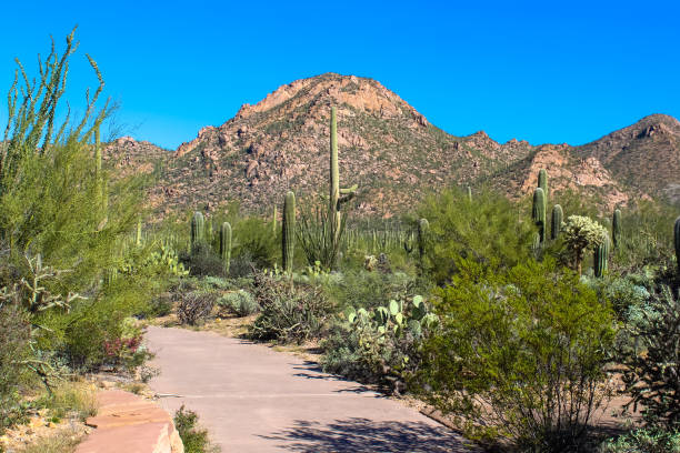 Visitor Center in Saguaro National Park stock photo