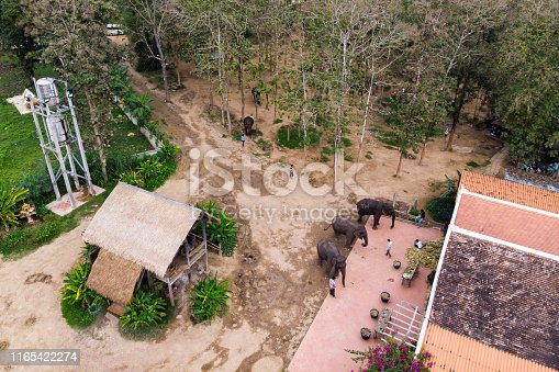 Visitors feeding the elephant. elephant fern in Laos. Luang Prabang. top view, aerial view