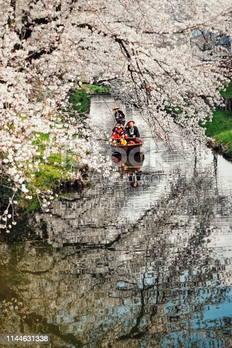 Kawagoe, Japan - March 31st 2019. As the cherry blossom trees over the Shingashi river come into full blook, the Kawagoe community organise a recurring traditional boat ride along the river in the morning. In the frame the river and cherry blossom trees are visible (and reflected on the water). Visitors in the traditional boat as well as the drivers are visible