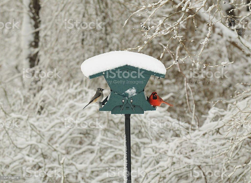 Visitors to birdfeeder in winter stock photo