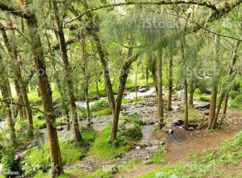 Vista del Parque Nacional Sierra Nevada Venezuela stock photo