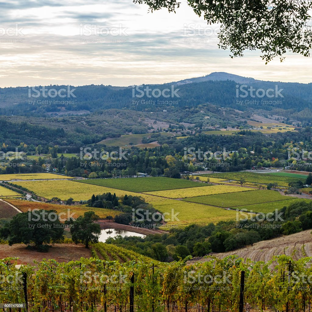 Vista of Sonoma Valley patchwork vineyard in autumn before sunset stock photo