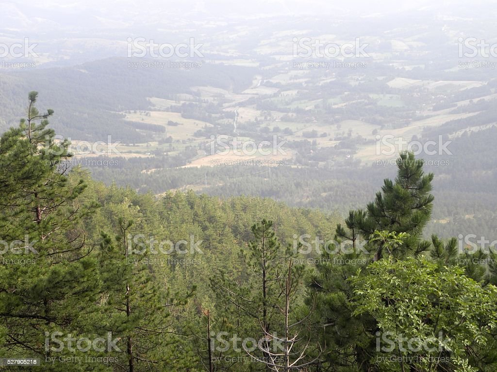 Vista of valley behind tree tops stock photo