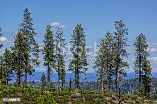 Ridgelines of distant mountains seen through the trees in Ochoco National Forest in Eastern Oregon