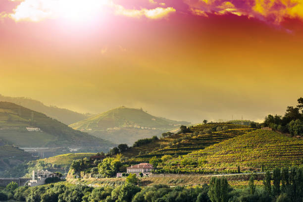 viticulture on the portuguese hills - douro imagens e fotografias de stock