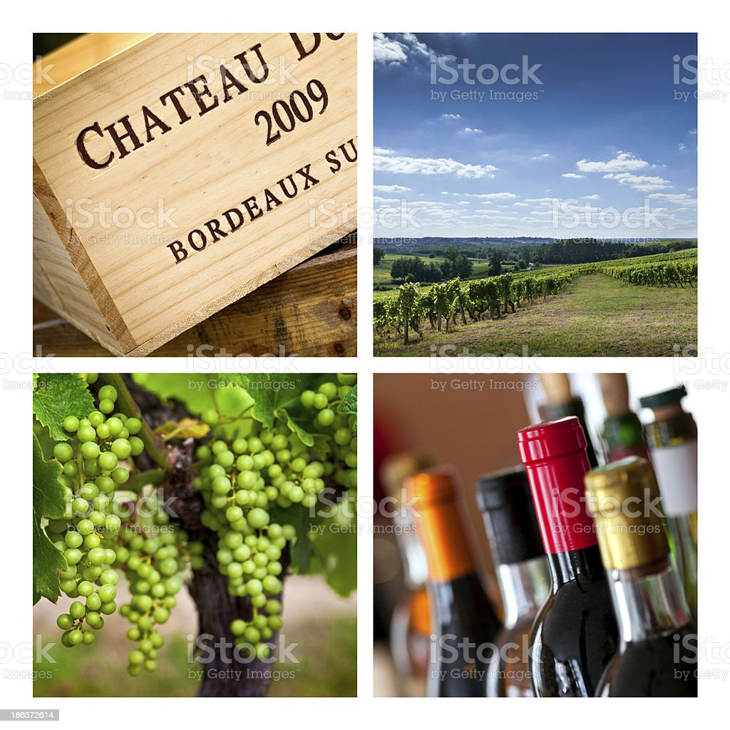 Viticulture royalty-free stock photo