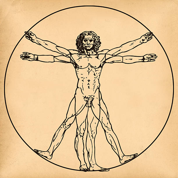 vitruvian man on old paper background - renaissance stock pictures, royalty-free photos & images