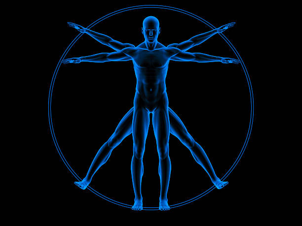 vitruvian man - biomedical illustration stock pictures, royalty-free photos & images