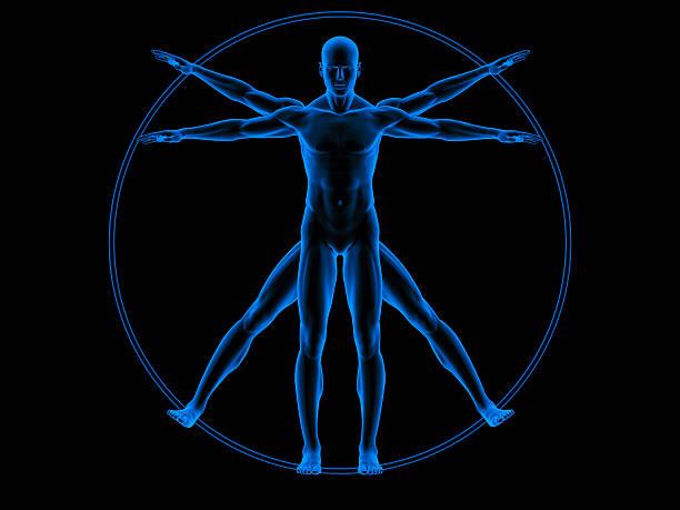 vitruvian man - i̇nsan vücudu stok fotoğraflar ve resimler