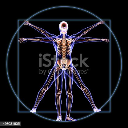 Human skeleton body of The Vitruvian Man