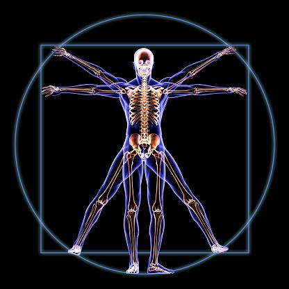 istock Vitruvian Skeleton Man Anatomy 496031805