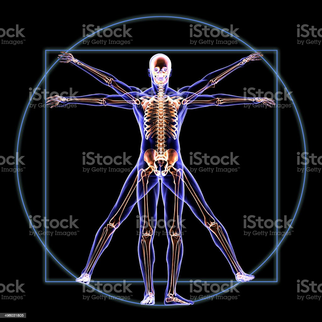 Vitruvian Skeleton Man Anatomy stock photo