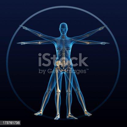 Vitruvian woman and skeleton