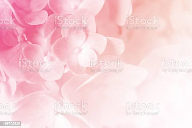 Photo of vivid color hydrangea in blur style