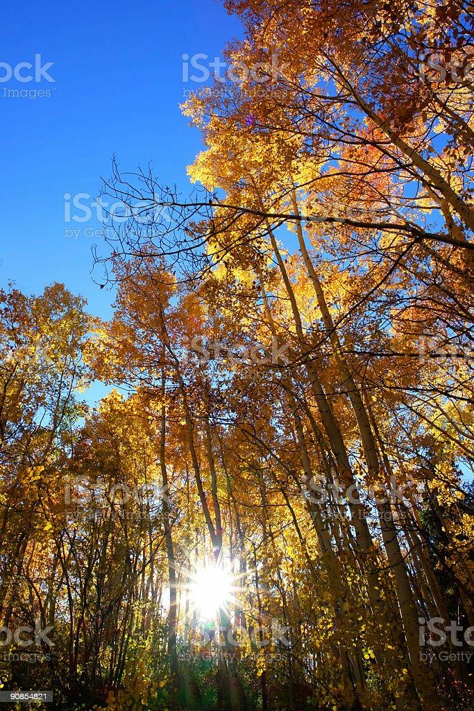 vivid fall colors royalty-free stock photo