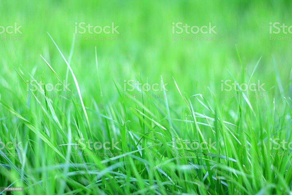 Vivid green spring grass stock photo
