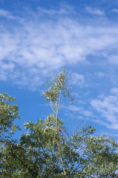 Vivid Sky stock photo
