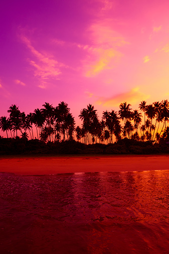 Palm trees on the beach at vivid tropical beach sunset with copy space
