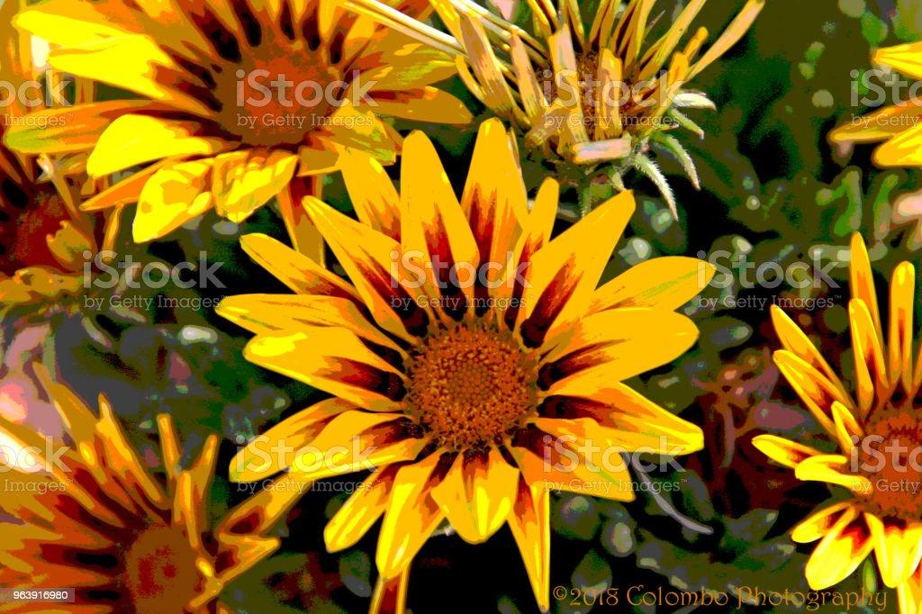 Vivid yellow orange daisy like flower cluster - Royalty-free Daisy Stock Photo