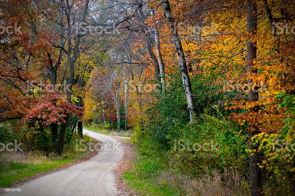 Vividly colored picture of dirt road in forest during Autumn stock photo